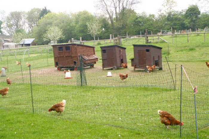 Orchard Trust Chicken House